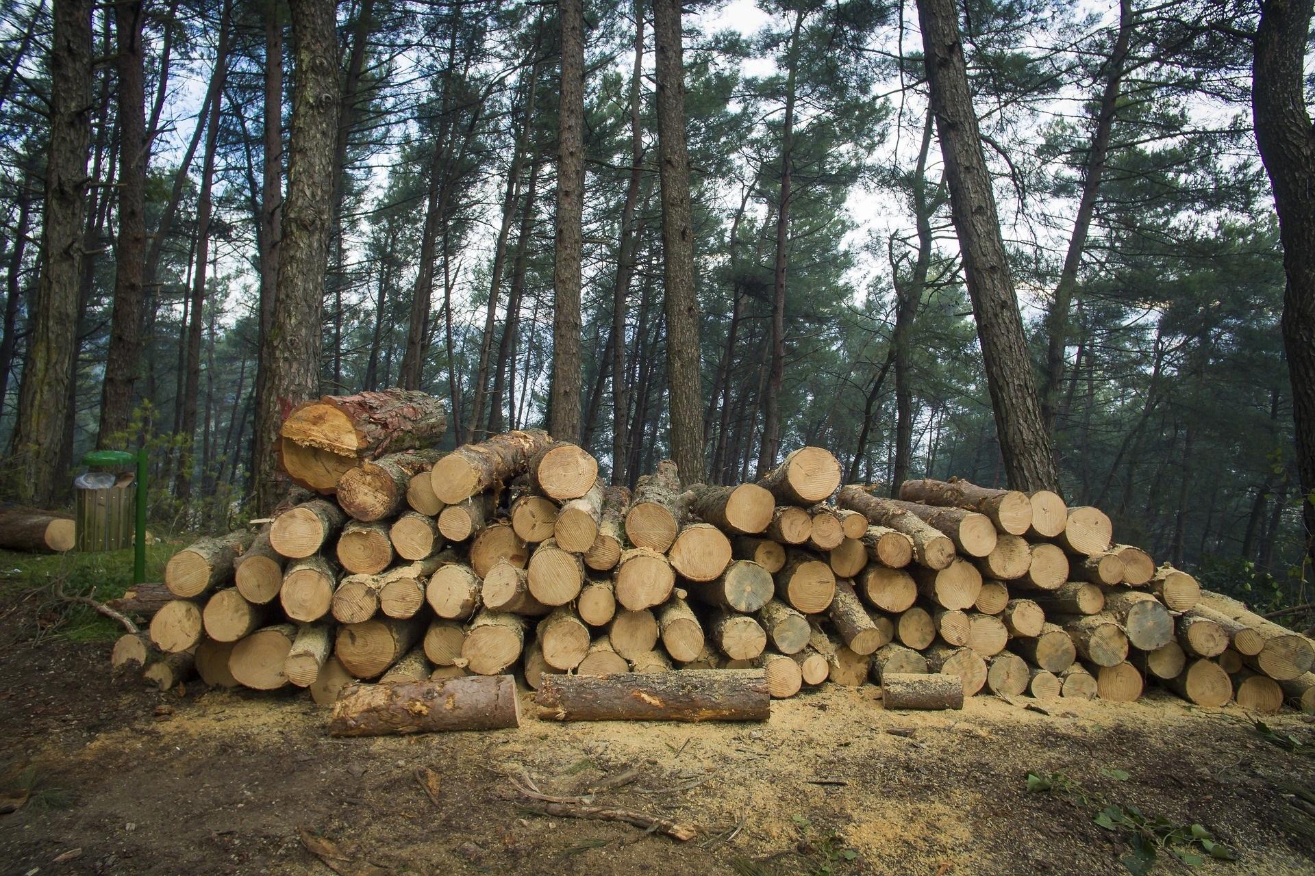 Цифровизация в сфере лесозаготовки